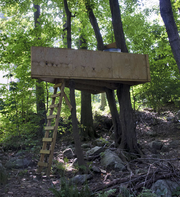 Commission To Take Closer Look At Tree Forts